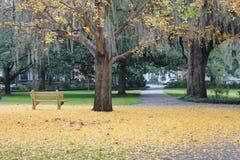 Поле листьев желтого цвета и скамейки в парке Стоковые Фотографии RF