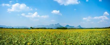 Поле и гора солнцецвета Стоковое Изображение RF