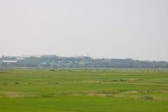Поле и деревня риса Стоковые Изображения RF