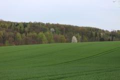 Поле и лес около KobeÅ™ice Стоковая Фотография