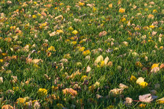 Поле и листья стоковые фотографии rf