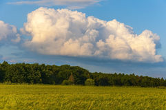 Поле и красивое небо Стоковая Фотография
