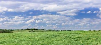 Поле и небо Стоковое Изображение