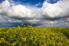 Поле и облачное небо рапса Стоковое Фото