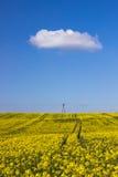Поле и облачное небо рапса Стоковая Фотография