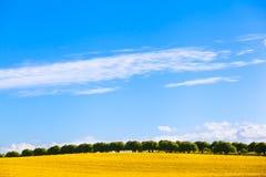 Поле и переулок рапса сельской местности Стоковая Фотография