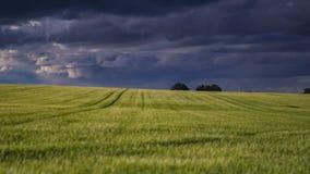 Поле, когда шторм придет Стоковое Изображение RF