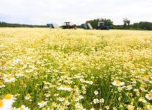 Поле красочной маргаритки с из трактором фермы фокуса на заднем плане Стоковые Изображения RF