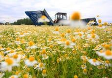 Поле красочной маргаритки с из трактором фермы фокуса на заднем плане Стоковые Изображения