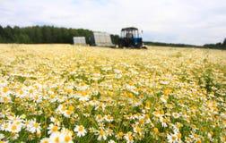 Поле красочной маргаритки с из трактором фермы фокуса на заднем плане Стоковое Изображение