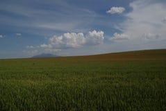 Поле мака в северной Испании Стоковые Изображения RF