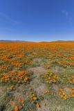 Поле мака Калифорнии Стоковые Изображения