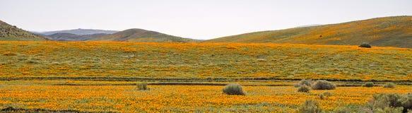 Поле мака долины антилопы Стоковая Фотография