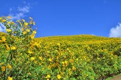 Поле мексиканского солнцецвета Стоковые Фотографии RF