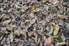 Поле мертвых листьев Стоковые Фото