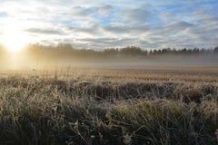 поле морозное Стоковые Фото