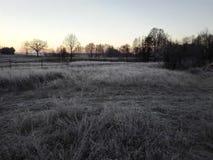 поле морозное Стоковые Изображения RF