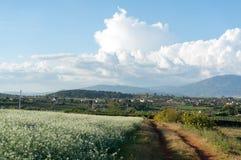 Поле мустарда с белым цветком в DonDuong - Dalat- Вьетнаме Стоковые Фото