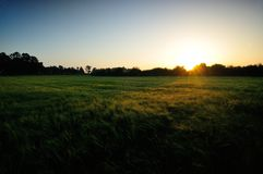поле над восходом солнца стоковая фотография rf