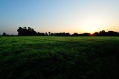 поле над восходом солнца стоковые изображения