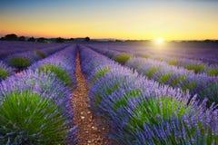 Поле на заходе солнца, Провансаль лаванды, Франция стоковая фотография rf