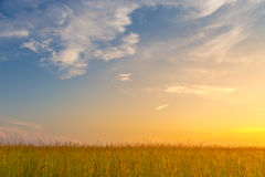 Поле на заходе солнца Стоковые Изображения RF