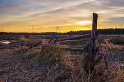 поле над заходом солнца весны Стоковые Фотографии RF