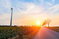 поле над заходом солнца солнцецвета Стоковое Изображение RF
