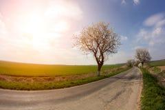 поле над заходом солнца Стоковое Изображение RF
