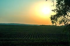 поле над заходом солнца Стоковая Фотография RF