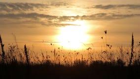поле над заходом солнца сток-видео