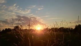 поле над заходом солнца Стоковые Изображения