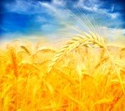 поле над пшеницей захода солнца Стоковое Изображение