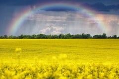поле над радугой Стоковое фото RF