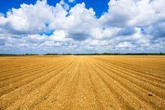 Поле овоща земледелия Стоковая Фотография