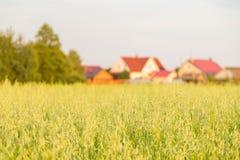 Поле овсов и загородных домов на заднем плане Стоковые Фотографии RF