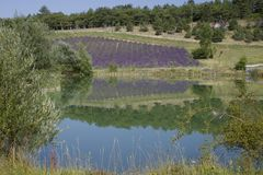 Поле озера и лаванды Стоковая Фотография
