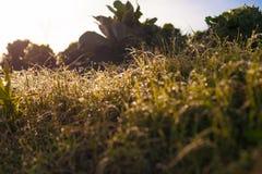Поле дома деревни свежих зеленых органических овощей фото азиатское Солнце выделяет предпосылку росы утра запачканную травой одич Стоковое Фото