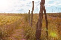 Поле осени, ландшафт Стоковые Изображения