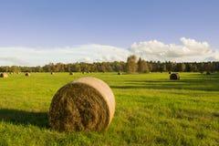 Поле осени, солнечный день Стоковое Изображение