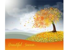 Поле осени с красивым деревом Стоковое Фото