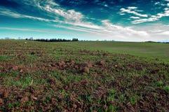 Поле осени с озимыми зерновыми культурами под голубым облачным небом Стоковое Изображение RF