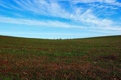 Поле осени с озимыми зерновыми культурами Стоковое Изображение RF