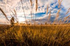 поле осени Стоковое Изображение RF