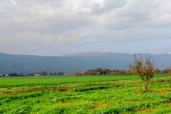 поле осени Стоковые Изображения