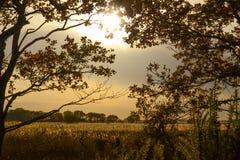 поле осени Стоковое фото RF