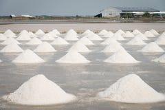 Поле лотка соли Стоковое Фото