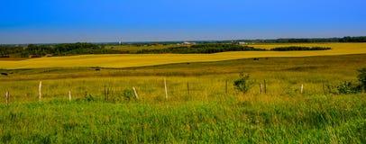 поле открытое Стоковое Фото