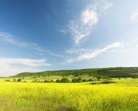 Поле от желтых цветов Стоковая Фотография