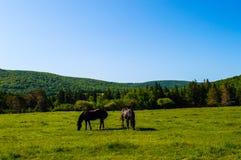 Поле лошади Стоковое Фото